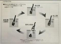 【俺のウンチク】ヘアサイクル〜其のニ〜